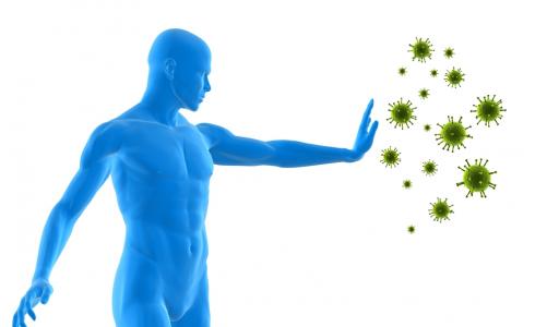 Polysacharidy z Reishi a Polyporu posilňujú imunitu